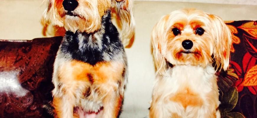 The Dawgs